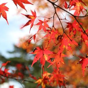 紅葉狩りの季節