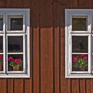 効果に驚き!家の外壁のコケを30秒で落とす方法は!?スプレーしてそのまま放置でいいんです!
