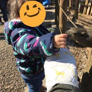まちだリス園で動物と触れ合う。動物たちが近い。