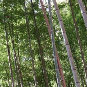 【笠間】常陸国出雲大社 社殿の後ろに広がる霊園と頂いた御朱印