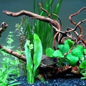 熱帯魚水槽で気になる音の発生源と対策方法
