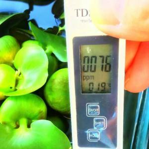 TDS ECメーターを魚の薬浴濃度測定で利用してみた!