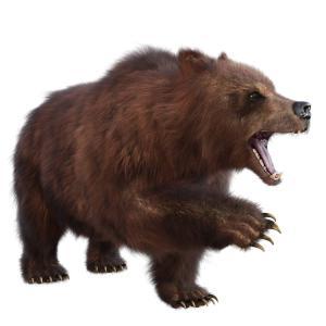 熊の生態を正しく知り引き寄せない遭遇しないために出来ることは?