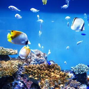 DIY で熱帯魚水槽のバックスクリーン