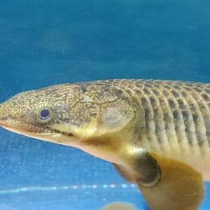 ろ過バクテリアPSB光合成細菌は魚を元気にする!!