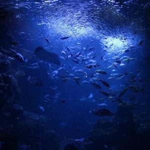 【悲報】長野県、魚が溶けるほどの汚染物質流出か