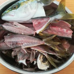 釣り人の特権 新鮮アジ・イナダのあらで 自己満最強の出汁&漬け を作る