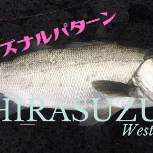 ヒラスズキ釣りをするなら知っておきたい「シーズナルパターン」