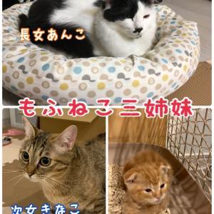 【猫三姉妹】ヒーリング効果がある画像を集めたのでご覧ください