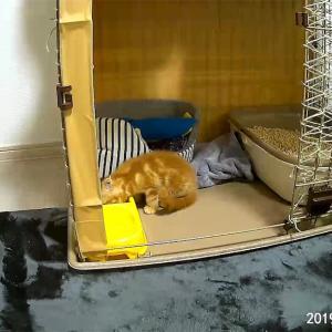 【猫動画】ついに本気を出す?ウェブカメラの動画機能で癒しを提供してみた