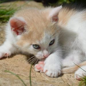 【注目】猫から教わる生きていくうえで大切なこと