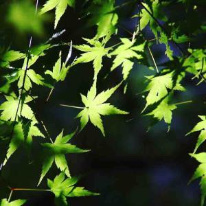 新緑の季節ですね〜