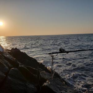 連続の石鯛釣り