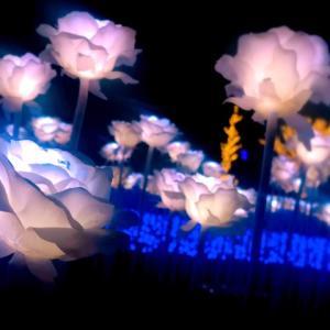 関東最大級の夜景!TOKYO MEGA ILLUMINATION -東京光の大祭典-