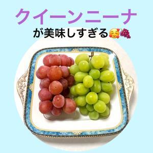 シャインマスカット越えの甘さ♡新種のブドウが美味しい!