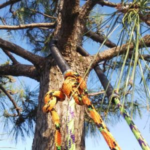 ツリークライミングで松の木剪定