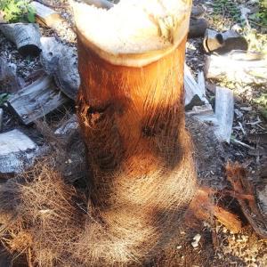 不定期投稿、樹種別薪割りレポ8「シュロ」