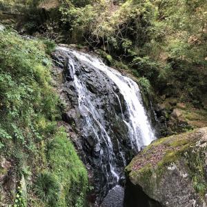 お気楽ピクニック 鳴滝森林公園