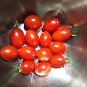 プチトマトとジャガイモ