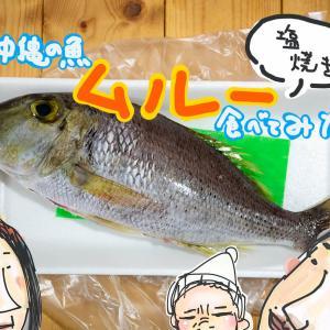 沖縄の魚「ムルー(マトフエフキ)」食べ方は塩焼きで!