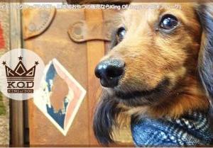 【神戸北野】KING OF DOG(キングオブドッグ)行ってきた!犬服&無添加おやつまとめ