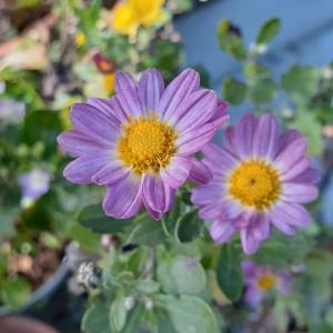 今日の花とベートーヴェン♪