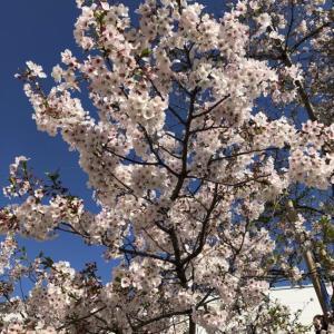 【SAPIX】春期講習最終日!感想を聞いてみた!