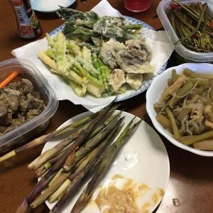 タケノコは焼いても良し、天ぷらにしても良し
