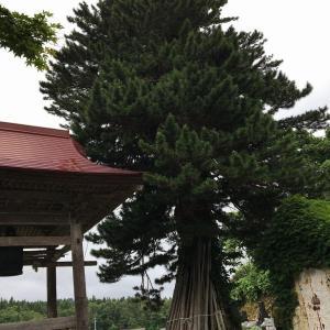 何の巨木?