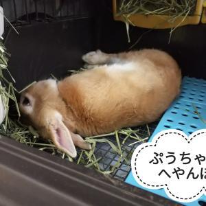 睡眠の邪魔