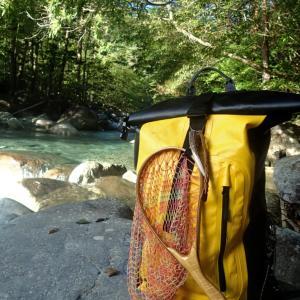 残暑の中、美渓で釣りしてると熱い視線【木曽川水系 ホームリバー】