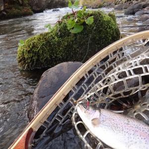10月22日 北海道の見頃の紅葉をめでるコラボ渓流釣行