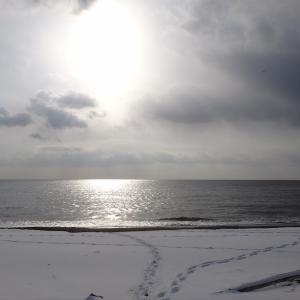 12月22日-サーフのスチールヘッドを夢見て。