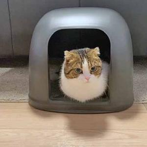 猫が好きなトイレ環境/汚れたトイレが大嫌い!【デオトイレ】を買ってみました。