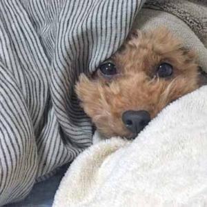 寒さに弱い犬と猫・寒さに強い犬と猫の種類や特徴/寒い冬の過ごし方