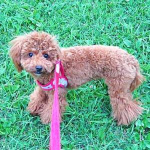 【ベチバー】犬と猫に安心!天然植物素材100%の虫よけスプレーの効果