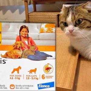 愛猫には、食べるタイプのノミ駆除薬【コンフォティス】がオススメです!