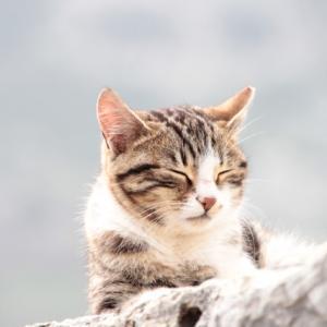 【沖縄歌】こんな賢い猫ちゃんと欲しい!与那国のマヤーぐゎー(ネコ)♪