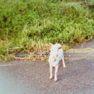 """""""今を楽しく生きる""""が大前提の沖縄文化と会社でのこと。"""