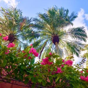 沖縄はなぜこんなにも鮮やかなのだろう。
