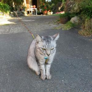 散歩で猫-22