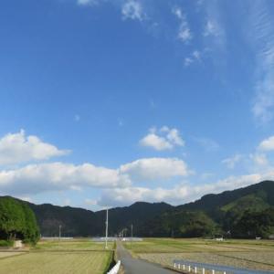 11月14日の散歩 晴れ