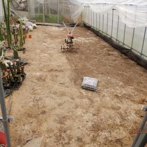 3月30日 今日の温室作業と花 & 即売会のお知らせ