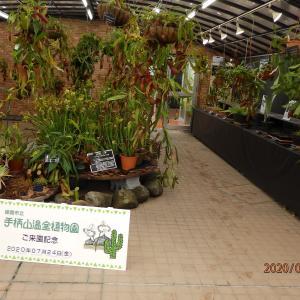 7月24日 植物園の食虫植物展