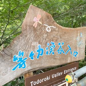 「ここは本当に東京か!?」東京23区内にある大自然『等々力渓谷』に行ってきたよ。