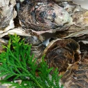 岩牡蠣やってきた