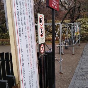 4月10日からは弘前公園自体を閉鎖する事に決めたみたいです。