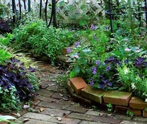 今朝のお庭
