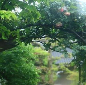 梅雨入りのお庭