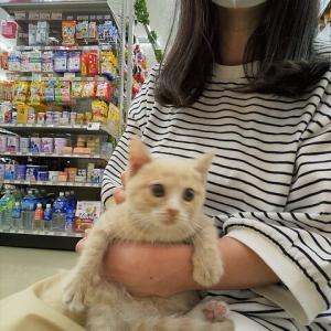 子猫を抱いた🐈癒された~🤗💕